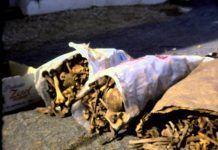 Las fosas de Montijo, filmación de 1980 de las exhumaciones de fusilados en la Guerra Civil
