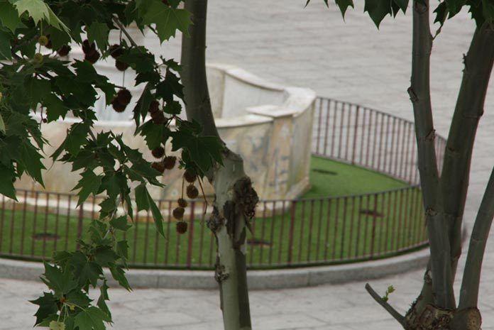 Destrozadas, durante el fin de semana, las plantas de la Plaza de España