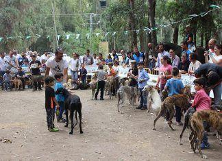 Concurso morfológico del galgo español en Barbaño
