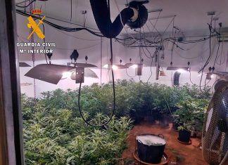 Plantas de marihuana en una vivienda de Talavera la Real.