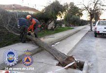 Caída de árbol a la vía pública en la Calle Agla de Montijo