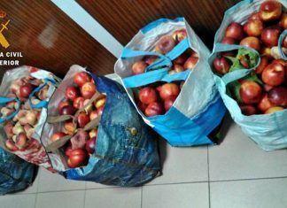 La Guardia Civil sorprende a dos vecinos de Badajoz con 100 kg de fruta que acababan de sustraer en Valdelacalzada