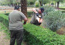 Alumnado de Montijo Te Cuida 2 mejora las zonas verdes de Montijo