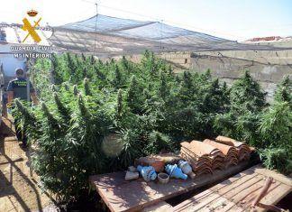 Plantación de marihuana en Arroyo de San Serván