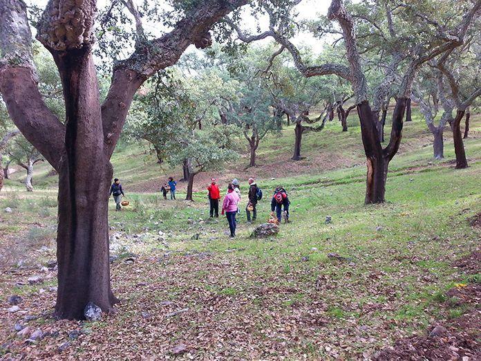 Recogiendo setas en la Sierra de San Pedro