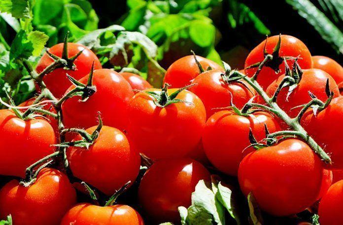 Jornada del Tomate
