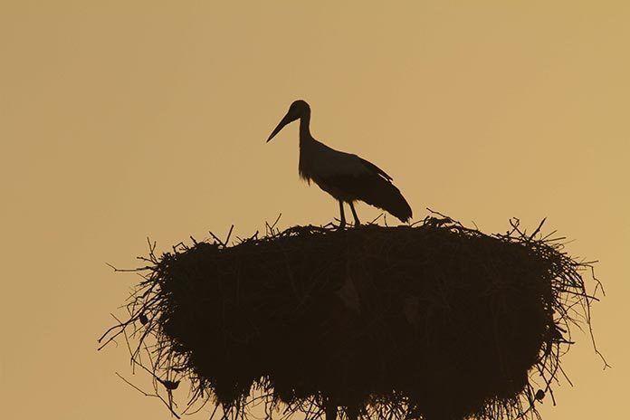 contraluz-nido-de-ciguena-venidos-del-cielo