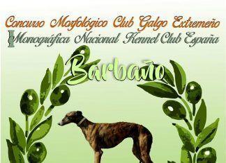 Cartel Concurso-Morfologico-del-galgo-Espanol-de-Barbano