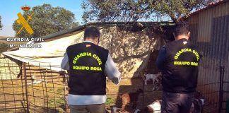 Inspección ganado guardia civil arroyo de san servan