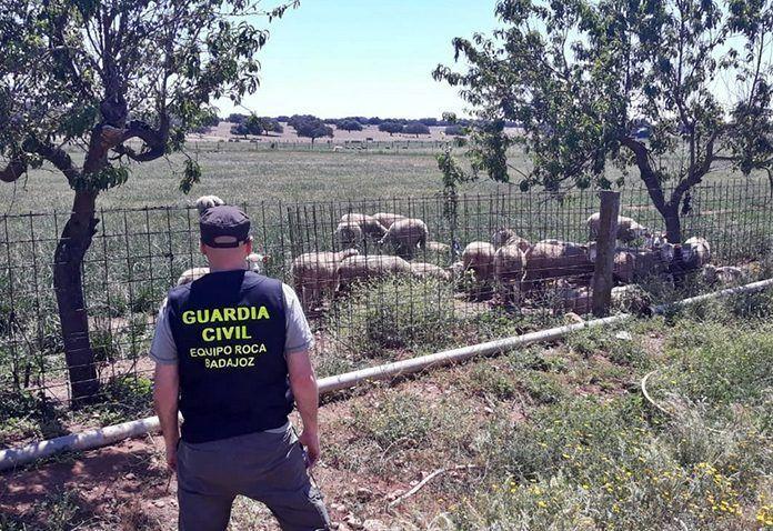 grupo Roca Guardia Civil