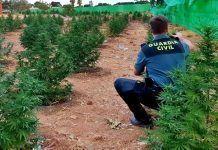 plantacion de marihuana en montijo badajoz