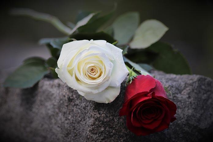 rosas día de Todos los Santos