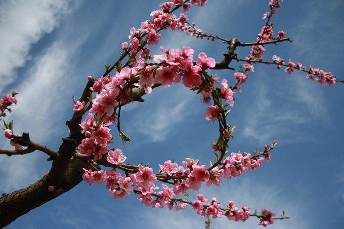 La decimoséptima edición de Valdelacalzada en Flor se desarrollará del 1 al 29 de marzo