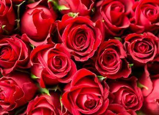 ¿Aún no tienes regalo de San Valentín?… en Montecito Garden Center tienes la solución