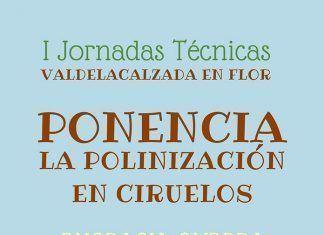 La polinización de ciruelos en Valdelacalzada en Flor con Engracia Guerra