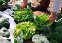 UPA reivindica la importancia de fomentar y proteger el modelo familiar de produccion de alimentos