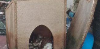 La Policía Local de Talavera la Real imputa a un hombre por maltratar a su perro hasta la muerte