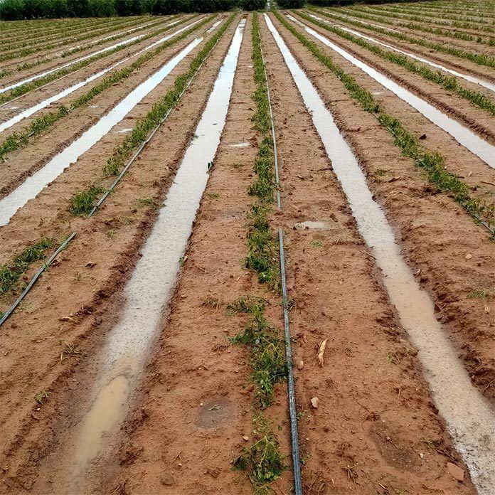 Una tormenta provoca daños en 200 hectáreas de cultivos de Torremayor