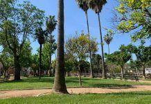 El Parque Municipal y la Plaza del Almendro de Puebla de la Calzada reabren sus puertas el lunes