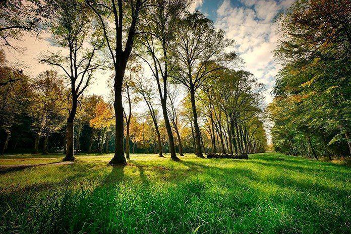 Se sacan a concurso las obras de reforma de los Parques Municipal y Juan Méndez de Montijo