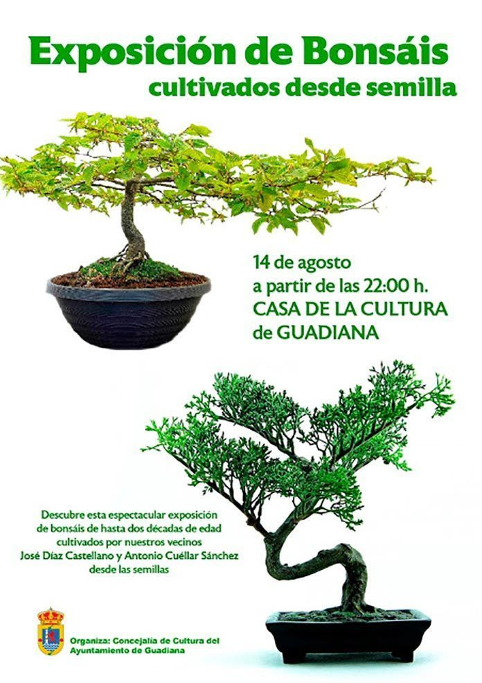 Exposición de Bonsáis en Guadiana
