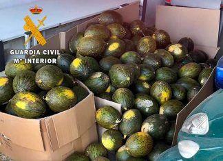 Cinco personas de Talavera la Real, Don Benito y Badajoz investigadas por sustraer más de una tonelada de melones y sandías en Guadiana