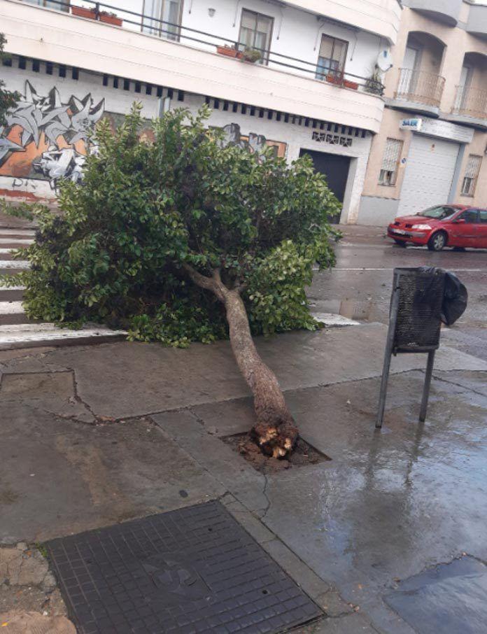 Incidencias por fuertes vientos en Montijo