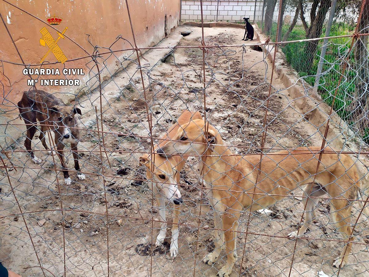 Investigan a un vecino de Puebla de la Calzada, por un supuesto delito de maltrato animal a 9 perros en Valdelacalzada