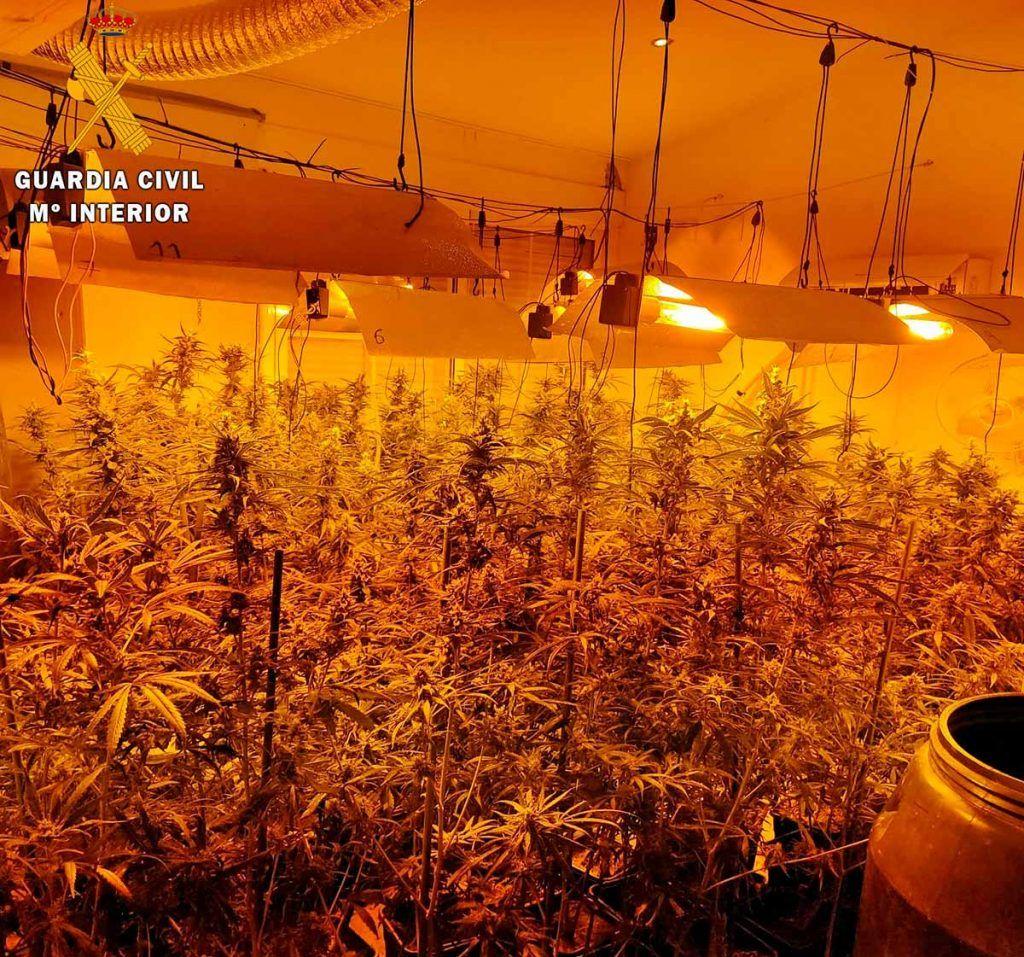 La Guardia Civil desmanteló en Talavera la Real una plantación de marihuana